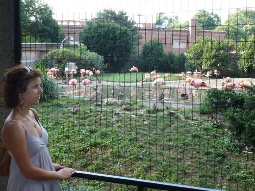 National Zoo, Washington D.C.